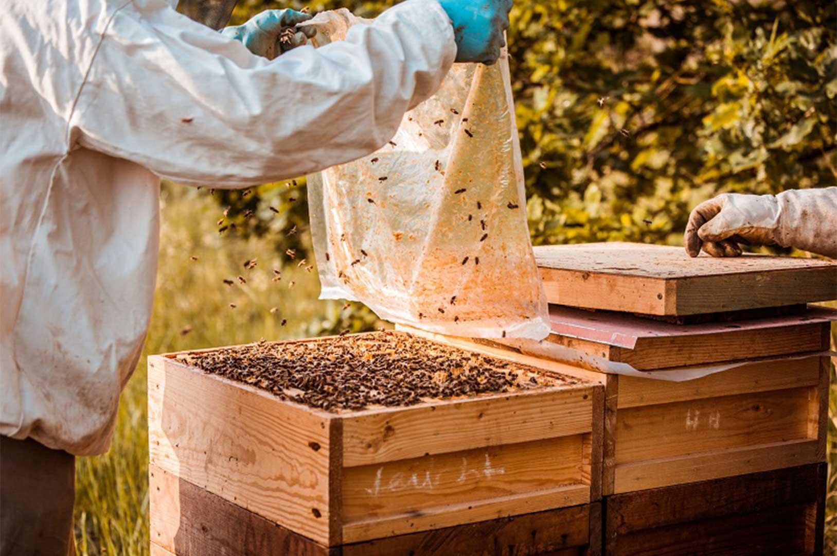 شعبهی پورشه در شهر لایپزیش ۲۵ کلونی از کندوهای زنبورعسل دارد که با مدیریت و تولید عسل از آنها، عسل خوراکی نیز تولید میکند.