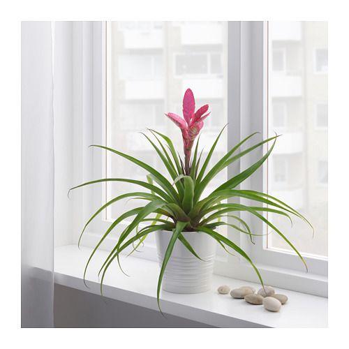 شکوفه گیاه در آپارتمان