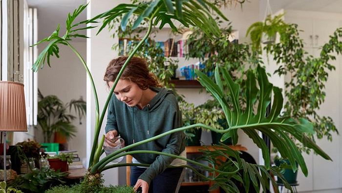 تاثیر گیاهان بر هوا